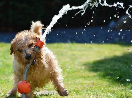 dog hot weather summer advice heatstroke hot car