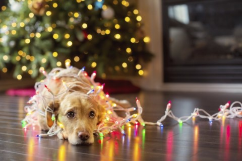 Christmas opening hours and emergency out of hours vet Shropshire Bridgnorth