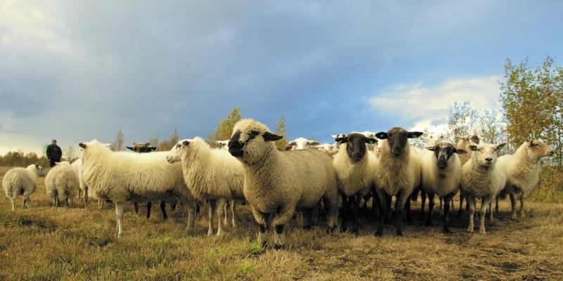 Farm Health Planning