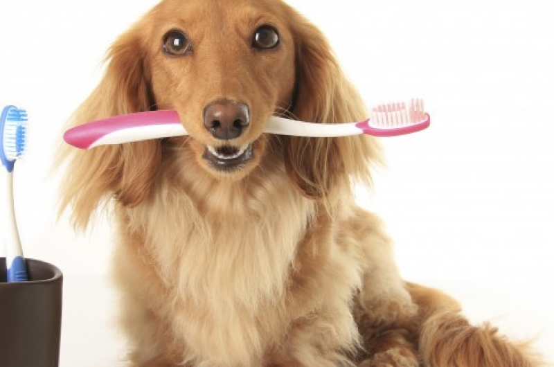 My Pet Has Bad Breath. What's causing it?