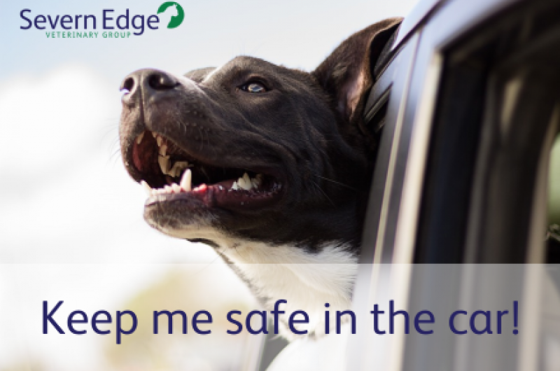 car travel and safety for pets