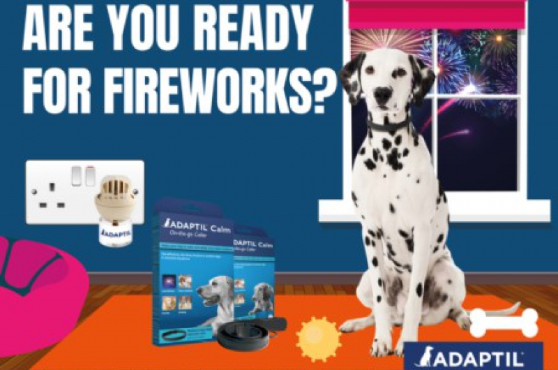 fireworks advice