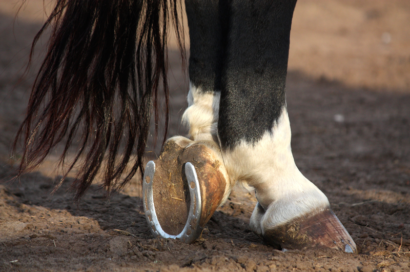 How to Spot & Treat Laminitis