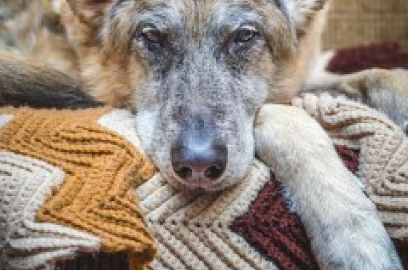 free senior pet nurse clinic including arthritis assessment