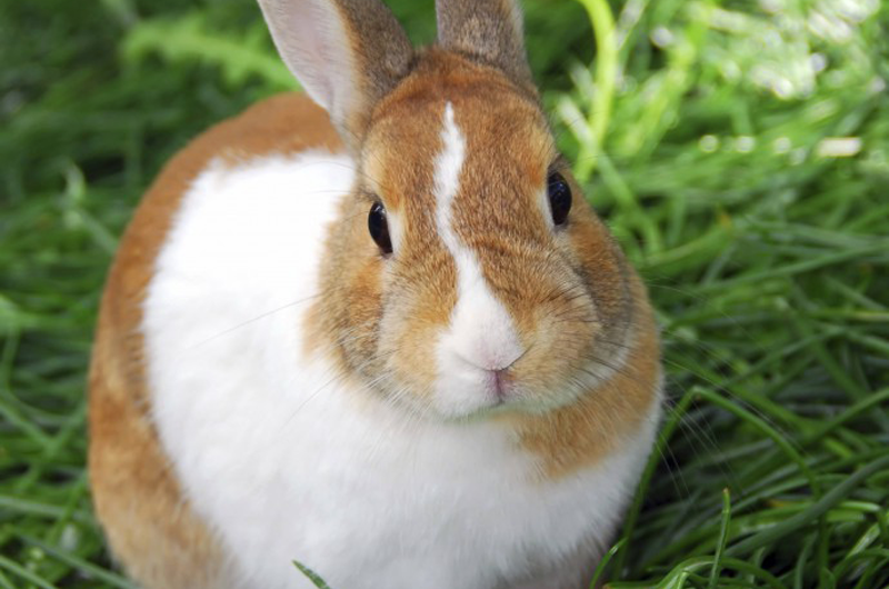 Improving Rabbit Awareness