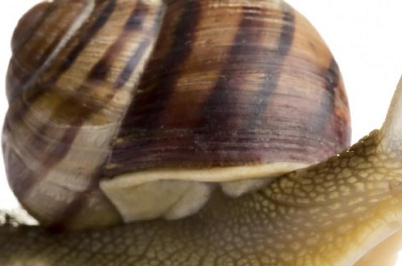 A Surfeit of Snails