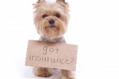 Pet Insurance Advice | Severn Edge Vets