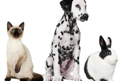 Pet Neutering Advice   Severn Edge Vets